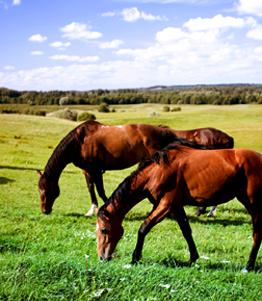 Ciatostomi zoetis it for Quanto costa mantenere un cavallo
